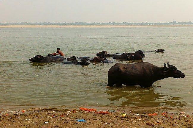 Life on Gange 10