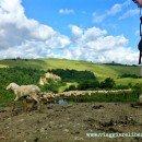 In cammino sulla Via Francigena senese