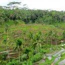 La Bali rurale tra risaie, templi e processioni