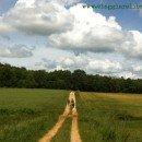 Elogio del camminare