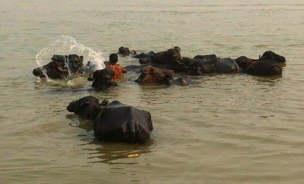 Varanasi in 10 scatti india - Cacca nel bagno ...