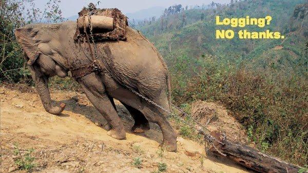 maltrattamenti-elefanti
