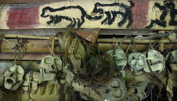 mentawai monkey skulls