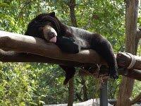 orsi della luna - phnom tamao (12)