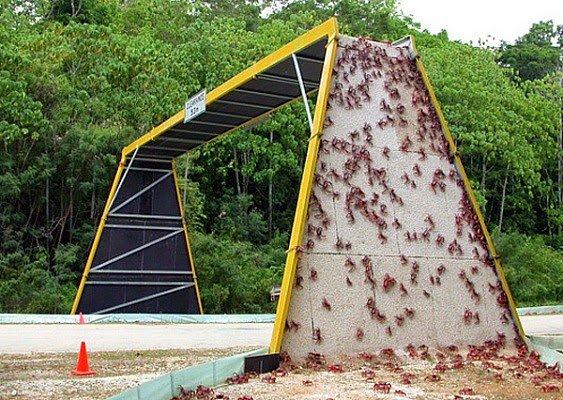 ponti per animali - granchi