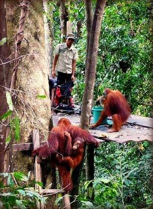 unsustainalbe-eco-tourism-bukit-lawang