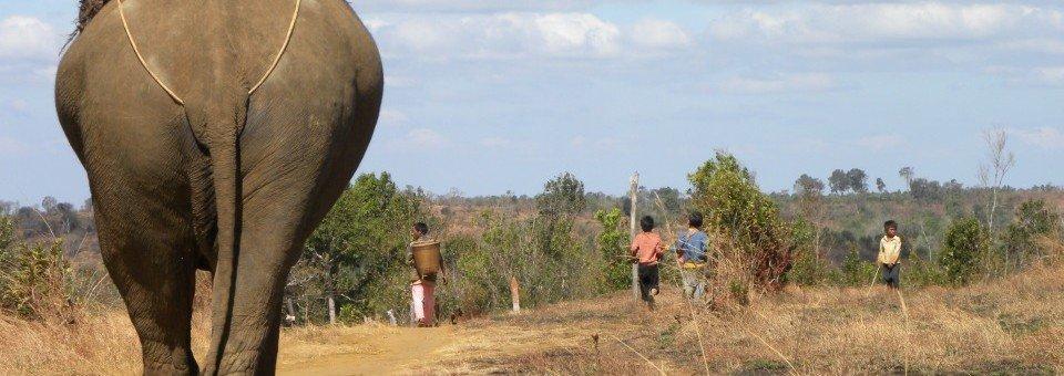 Elefanti asiatici e turismo: quello che devi sapere