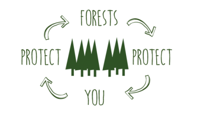 you-protect-forest-web