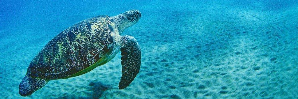 Tartaruga marina in Sicilia