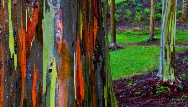 foresta arcobaleno