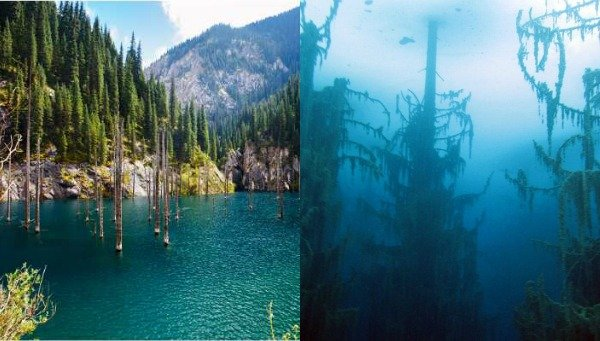 foresta-subacquea