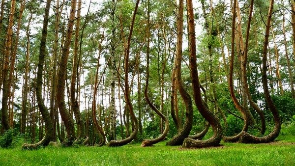 hooked forest Polonia