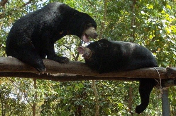 lotta orsi della luna