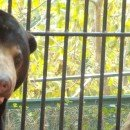 Volontariato in Cambogia con gli orsi della luna