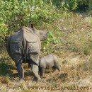 Parco Nazionale di Chitwan, Nepal