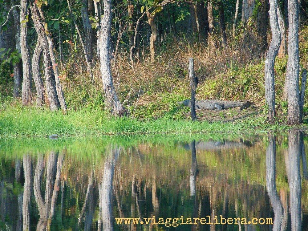 coccodrillo-Parco nazionale di Chitwan