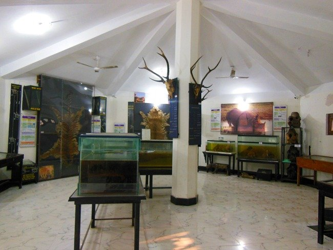 WIldlife museum sauraha