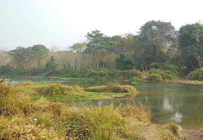 foresta Chitwan