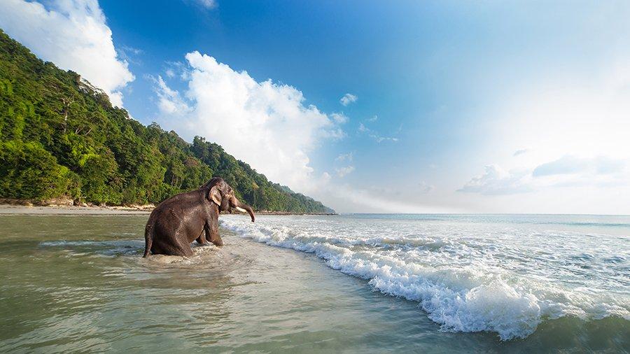 Elefante Andamane india