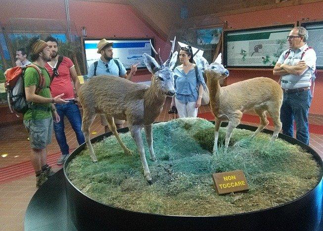 Daini museo centro Cupone
