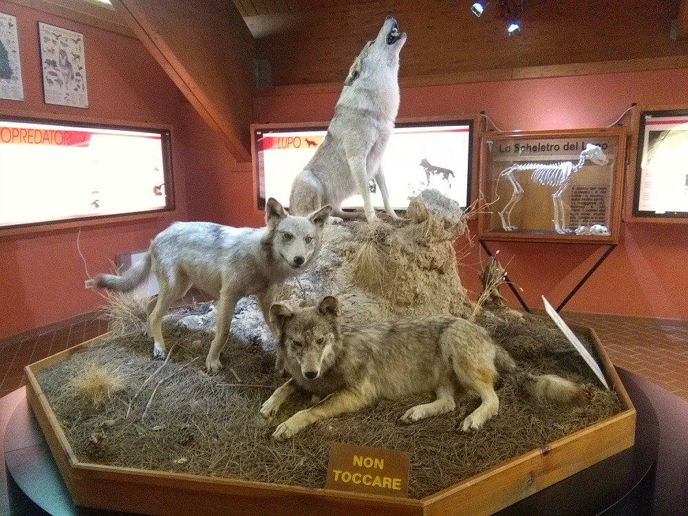 Luoi museo centro Cupone Sila