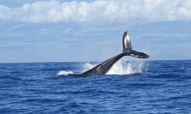 balene-sud-africa