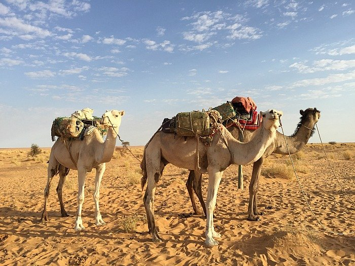 Cammelli - Viaggio in Mauritania
