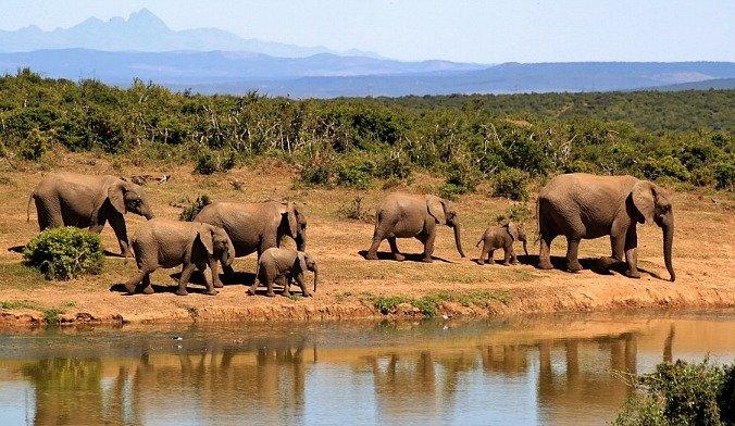 elefanti-sud-africa