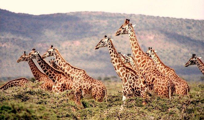 giraffe-sud-africa
