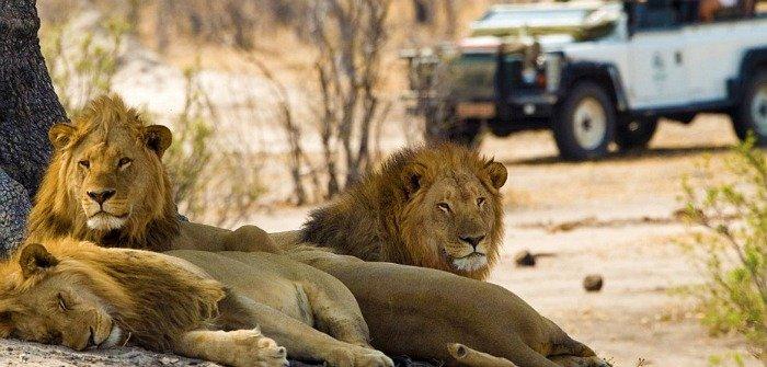 Leoni safari Sud Africa