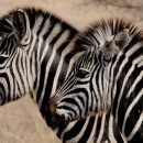 Safari in Africa? Sì, ma di turismo responsabile!