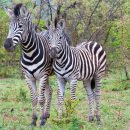 Safari al Kruger National Park – Sud Africa