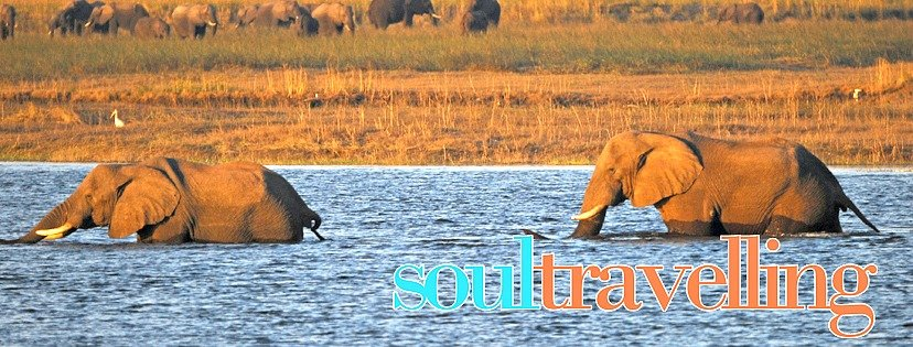 Elefanti - Turismo Sostenibile in Africa