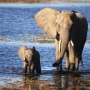 Safari fotografico in Botswana – Partenza 3 novembre 2017