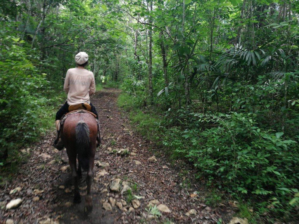cavallo Guatemala-min