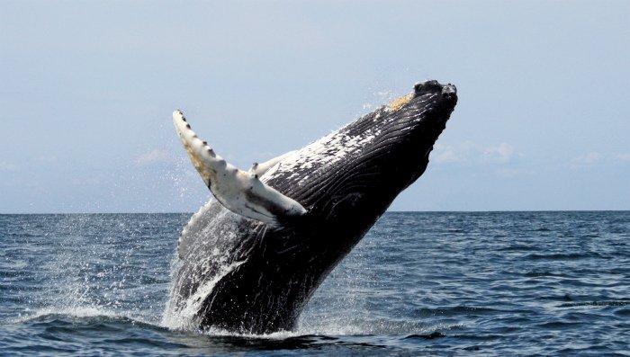 Balena Reunion