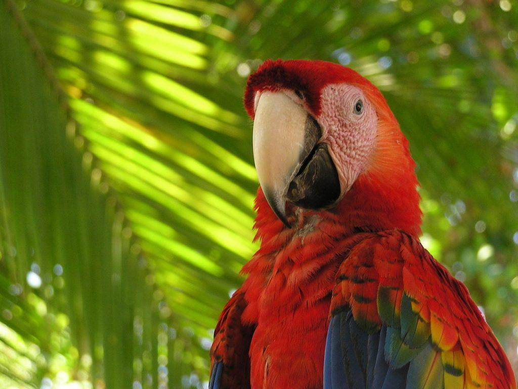 Pappagallo Costa Rica