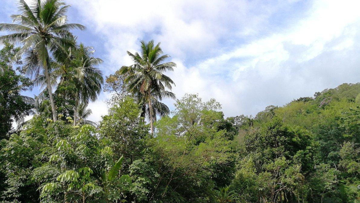 foresta natura thailandia