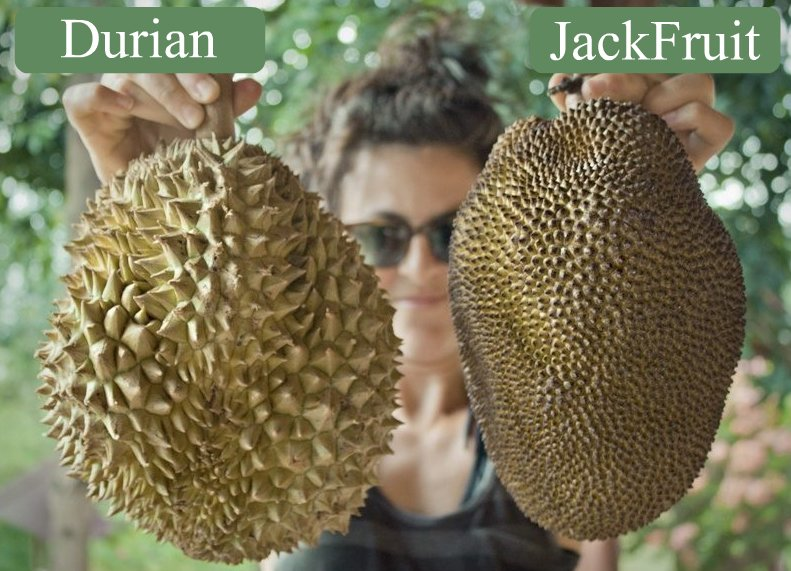 Differenza Durian e Jackfruit