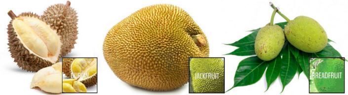 Differenza tra durian, jackfruit e albero del pane