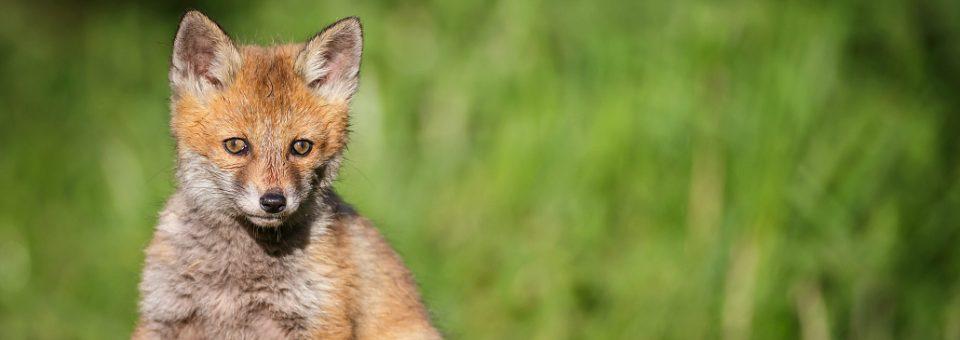 Perché non bisogna avvicinare e dare da mangiare agli animali selvatici?
