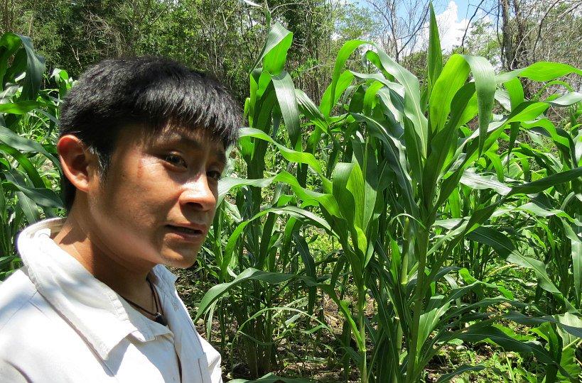 Mais pianta sacra maya