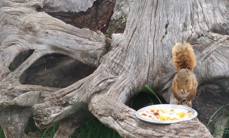 Non dare da mangiare agli scoiattoli