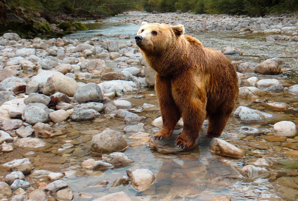 Avvistare orsi a Vancouver