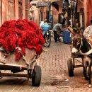 Tra i vicoli di Marrakech – Marocco