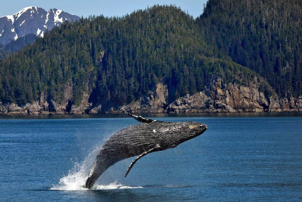 balene Vancouver
