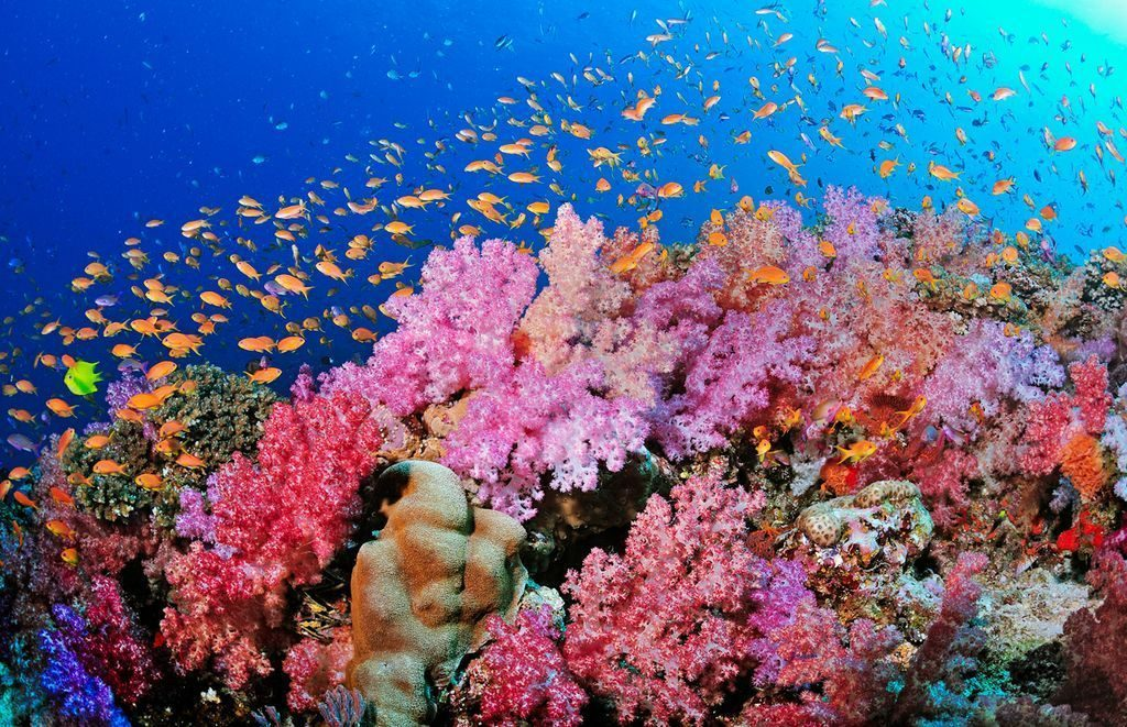 Barriera-Corallina-Fiji