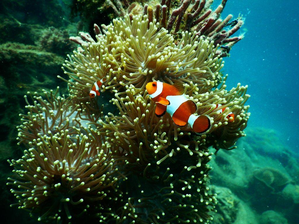 Barriera Corallina Aqaba Giordania