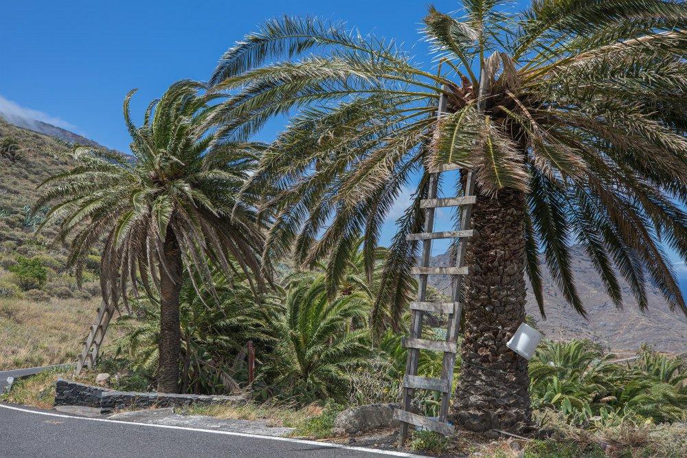 Miele di Palma de la Gomera
