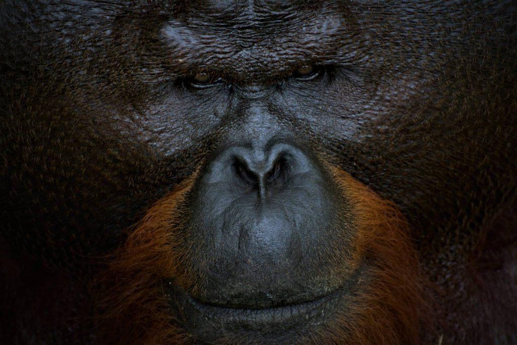 Orango